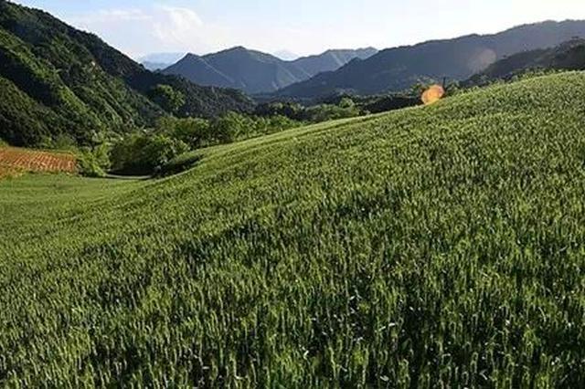 黑龙江省农林牧互为一体综合防护林体系已形成