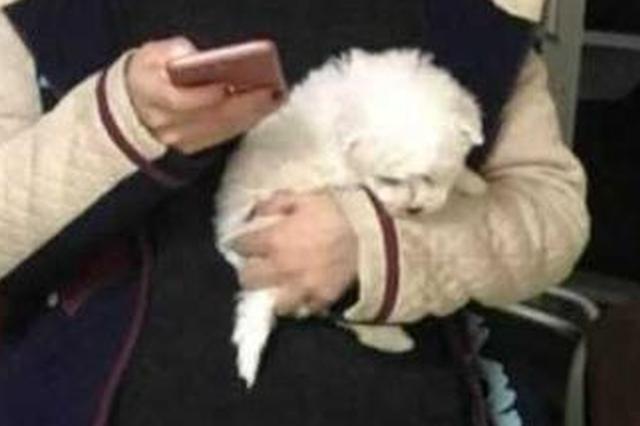 女大学生过年想带小狗回家 扮孕妇藏狗过安检被拦