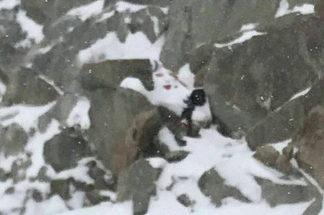 违规攀登四姑娘山遇难者男友独自离开?救援者回应