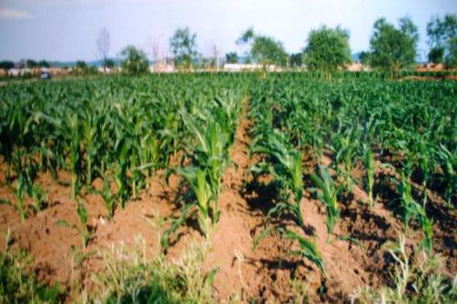 牡丹江市划定基本农田超省指标7.71万亩