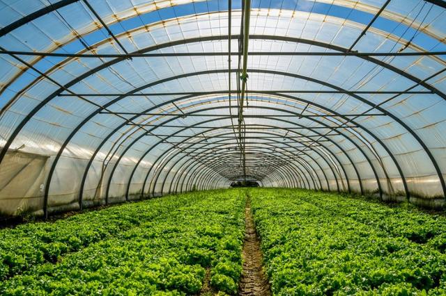 黑龙江省拜泉兰西等地发展棚室生产促贫困户增收