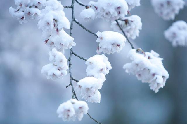 今明两天龙江大部有雪局地或现风吹雪 雪后小幅降温