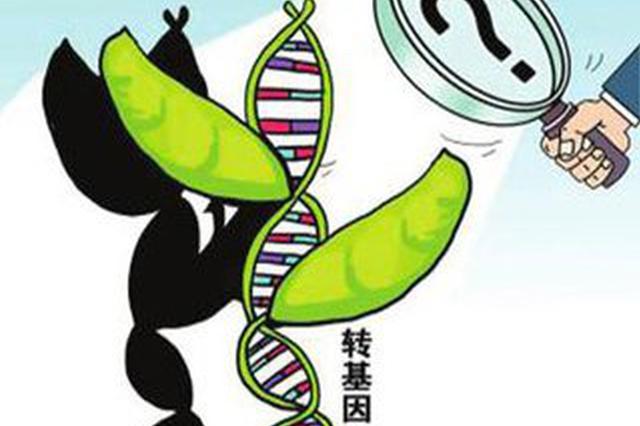 哈市出台转基因监管方案 玉米大豆田发现就铲除