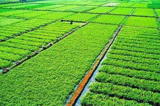"""哈市将推进""""三权分置""""试点 基本农田保护率将超80%"""