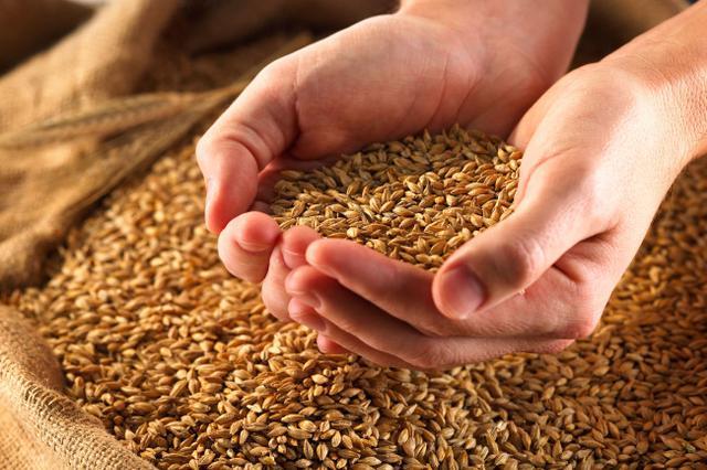 黑龙江省粮食交易市场泰来分市场正式揭牌