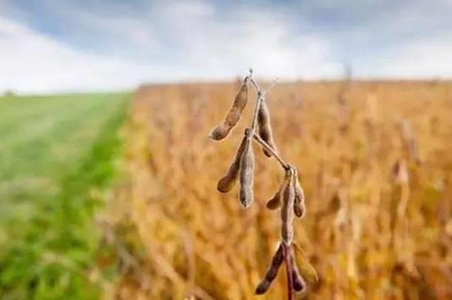 今年牡丹江市农业领域将加快十大产业建设