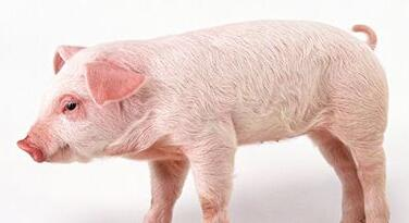"""黑龙江省""""两牛一猪""""项目去年竣工380个"""