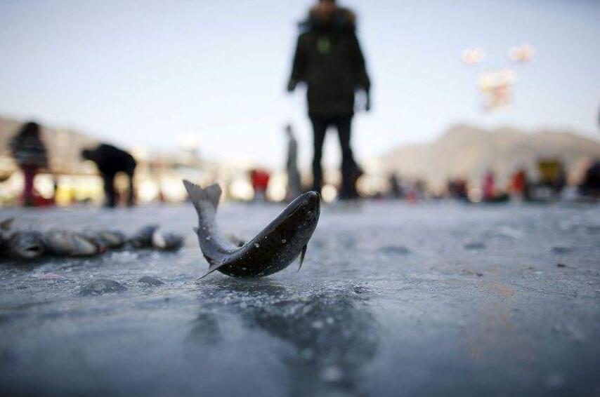 哈市通河县将举办全国最大冰钓比赛 总奖金达77万元