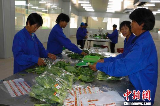 永州新田县龙泉镇东升村村民正在分拣叶菜。 永州供图