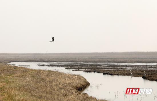 """到达保护区的候鸟""""先头部队""""在湖面悠闲地飞翔。摄影 秦楼"""