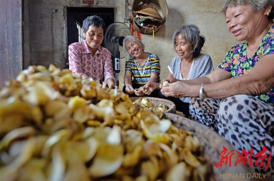 8月24日,邵东市斫𥕢乡梧桐村,村民在分拣加工新鲜百合。湖南日报·新湖南客户端记者 李健 摄