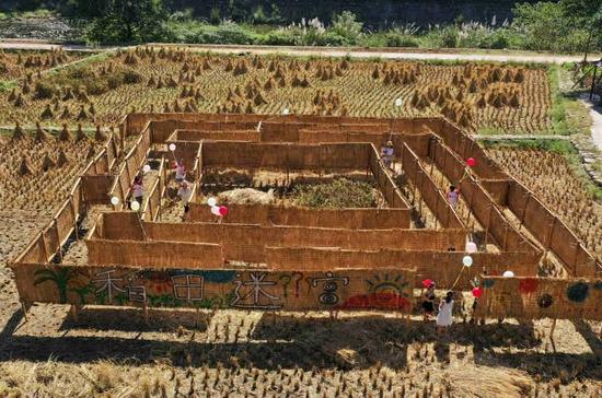 10月1日,游人在张家界武陵源黄龙洞景区稻田迷宫中游玩(无人机照片)。吴勇兵 摄