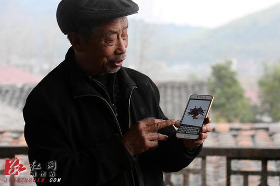 李昌发老人通过手机上网售卖灵芝。刘杰华 摄