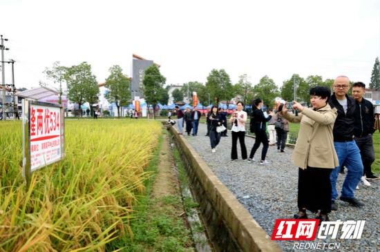 水稻新品种观摩会现场。
