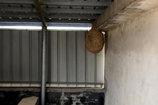 居民家中惊现10多斤马蜂窝,比篮球还大,消防员打碎了两次