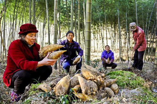 新宁麻林瑶族乡:立足楠竹资源优势 建设特色文化小镇