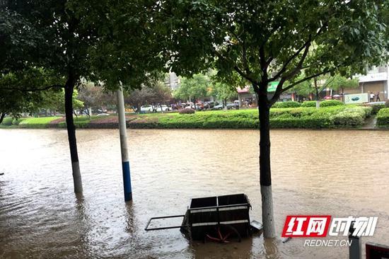 文轩路上的水已经涨到了绿化带的高度。