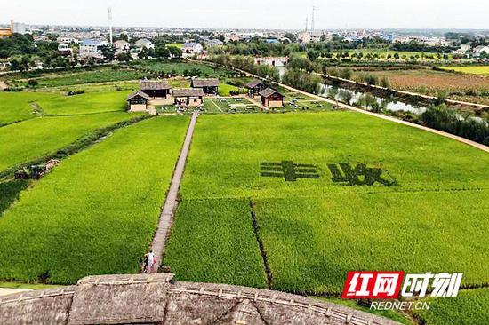 稻花香里农耕文化园一隅。