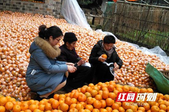 邓亚萍带队前往保靖县迁陵镇杨家村考察滞销柑橘。
