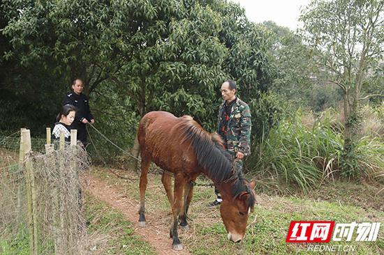 民警将走失马匹还给失主。