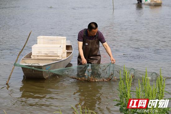 好水好草养好虾。