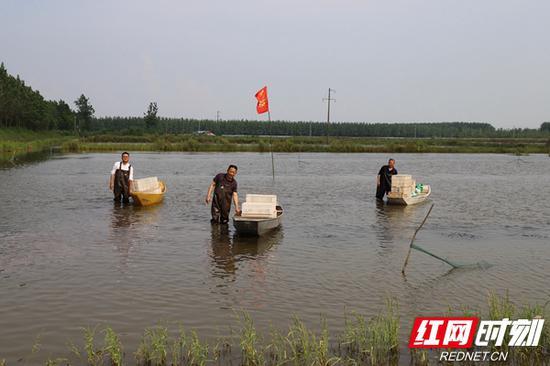 波光粼粼的水面,与虾船相映成趣。