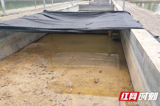 """两只从岳阳接到省水管所的山瑞鳖暂时的""""新家""""。"""