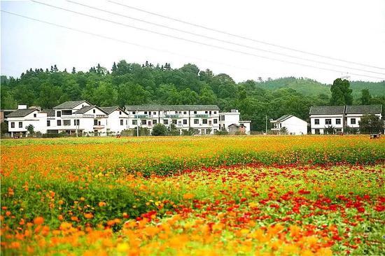 七彩花田、风景如画,一幅全新的新乡村文明画卷在八方宾朋面前徐徐展开。