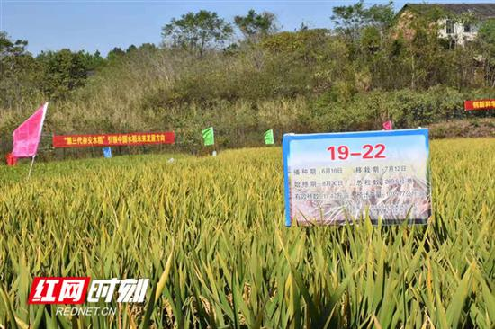 示范区位于衡南县向阳街道办事处筹备组清竹村梓木冲组,面积35亩。