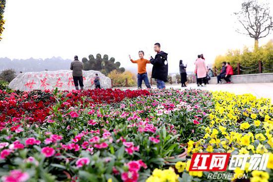 1月5日,湖南省植物园内不乏携家出游的游客。