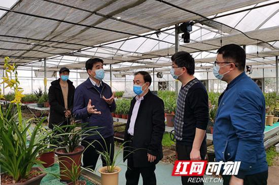 湖南省农科院党委书记柏连阳(左二)在院属单位调研。