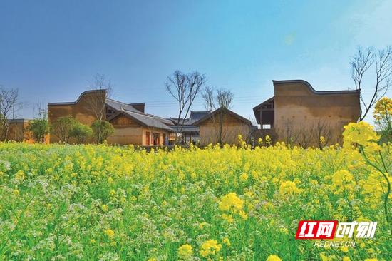 在长沙县果园镇田汉文化园附近,1200亩油菜花竞相绽放,装点着村落。章帝 摄