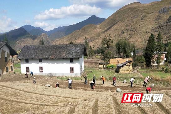 四都镇内,村民们正在翻地堆垅。