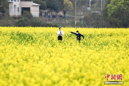 3月16日,湖南省长沙市含浦街道附近的千亩油菜花海正值盛花期,吸引游人前来观赏。中新社记者 杨华峰 摄