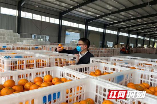 舒兴华的仓库里储藏的橙子。(图片由受访者提供)