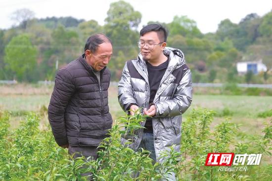 昨日,路口镇花桥湾村贫困户王泽均(左)带着湘移农林负责人宋希来到自家的苗圃里,查看鹰嘴桃苗的长势。章帝 摄