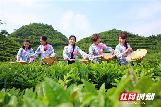 高山茶场。