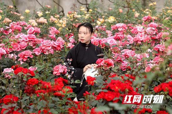 一名游客在花海内赏花。