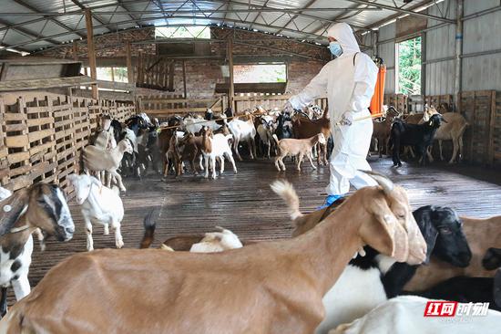防疫人员正对羊舍环境卫生消毒。