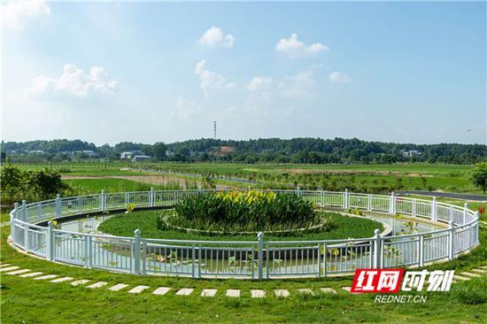 陈家桥村的一处沼气池。