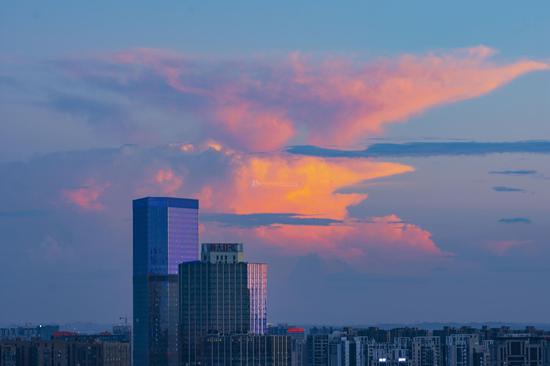 8月2日,日落西山红霞飞,看起来像颗大花菜。图/吴非