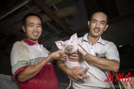 """(""""肢残兄弟""""王均波、王均尾靠养猪,过上了小康生活。 唐俊 卜云 摄)"""
