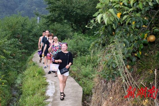(8月11日,沅陵县官庄镇界亭驿村,游客从四季水果采摘园满载而归。)