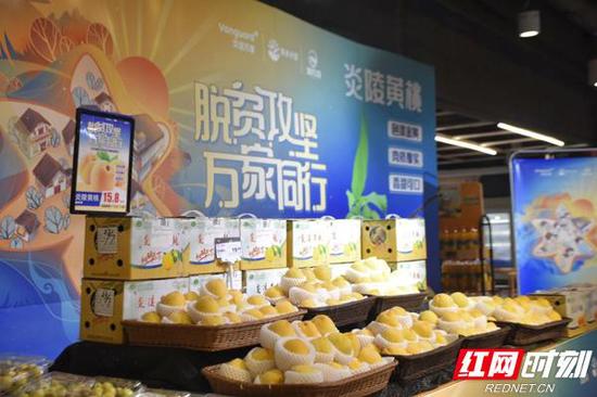 湘农荟炎陵黄桃专场人气火爆,直播平台观看流量1800.5W人次,线上线下销售超过1192万元。