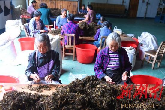 (9月13日,安化县江南镇金田村,村民在扶贫车间加工黑茶。湖南日报记者 徐行 摄)