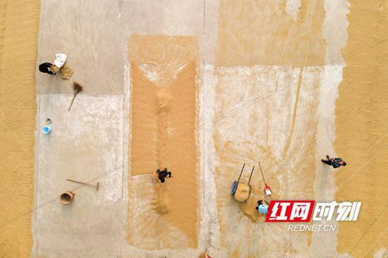 10月19日,双峰县井字镇花桥村,农民在晾晒稻谷。