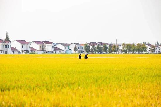 """""""平""""语近人 破解种子""""芯片""""难题,湖南打造种业创新高地!"""