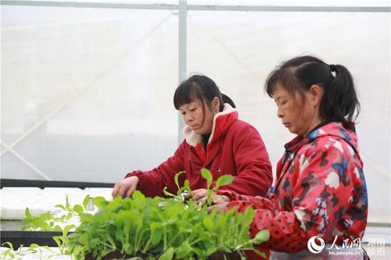 通过发展智慧农业,本地农民的种植方式也在改变。人民网李芳森摄
