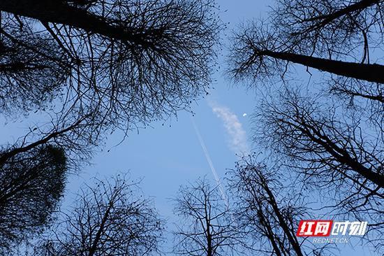 半个月亮爬上树梢。