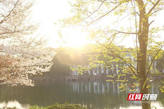 阳光透过树丫,照在湖面上。